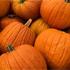 Vermont pumpkin harvest average despite weather
